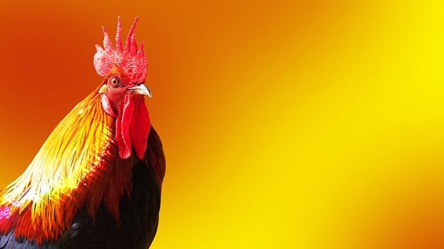 cock-1971204_640.jpg