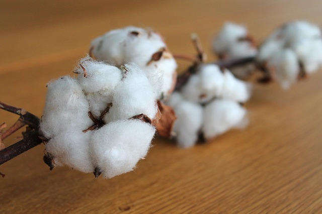 cotton-branch-1271038_640.jpg