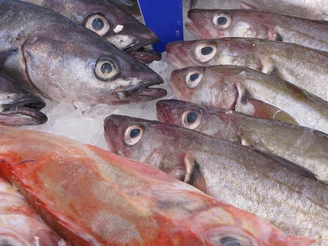 fish-214850_640.jpg