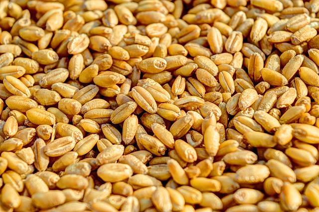 wheat-381848_640.jpg