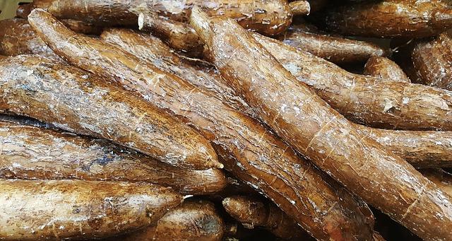 yucca-1353258_640.jpg